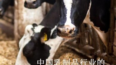 Photo of Modernization of dairy industry in China From PricewaterhouseCoopers