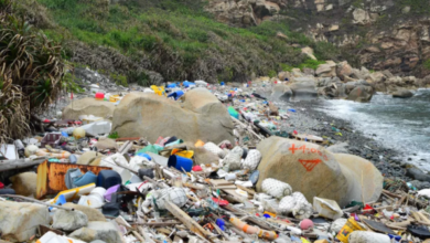 Photo of Research shows that the United States is one of the countries that produce the most plastic waste in the world From University Of Georgia